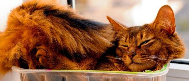 Četras apburošas kaķu darbības, kurām saimnieks nespēj pretoties