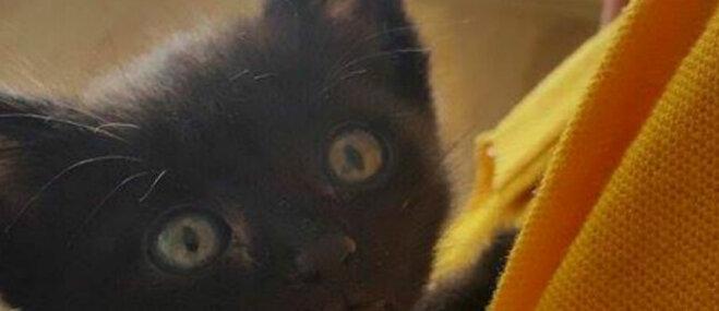Daži devušies uz citiem medību laukiem, trīs vēl cīnās: lūdz palīdzību kaķēnu ārstēšanai