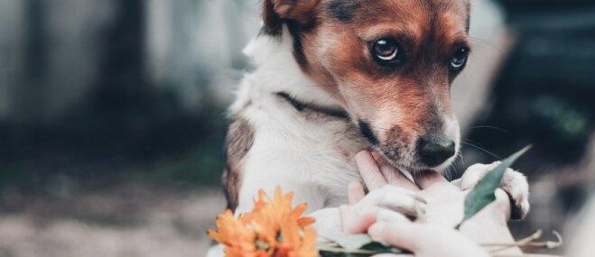 Piecas suņu apmācības metodes, kuras mūsdienās vairs neizmanto