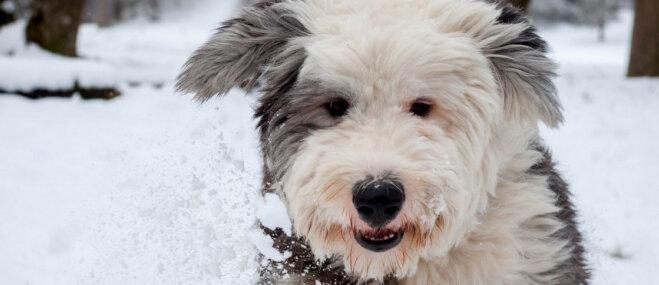 Trīs biežākās problēmas, kas piemeklē suņu saimniekus ziemā