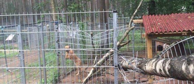 Vējš izposta patversmes suņu voljeru, lūdz palīdzību tā atjaunošanai