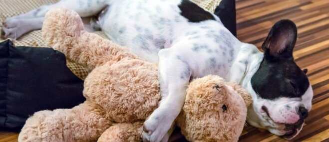 Kāpēc ir svarīgi, lai suns pavadītu laiku klusumā un mierā