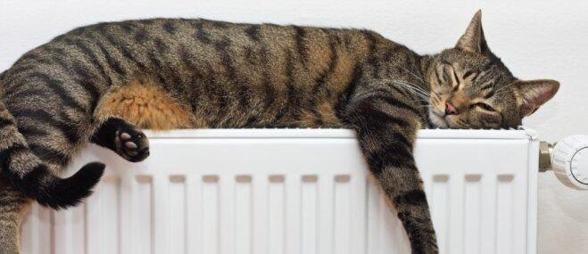 Bez kaķiem nevar! Situācijas, kuras atpazīs katrs mīluļa saimnieks