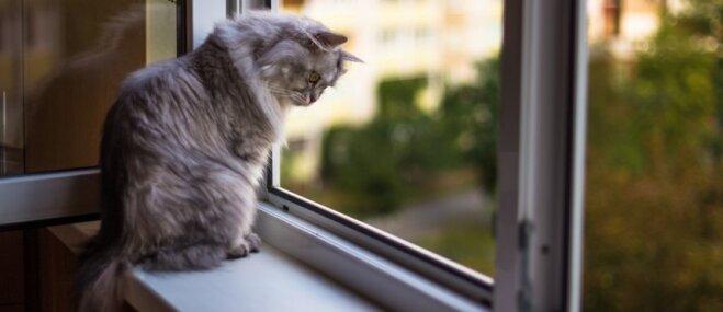 Kāpēc kaķu saimniekiem jābūt uzmanīgiem, saulainās dienās vēdinot istabas