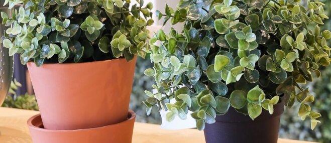 Kā notīrīt noputējušos mākslīgos augus