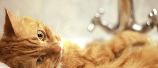 Foto: Pieķerti izlietnē – situācija, ko atpazīs teju katrs kaķa saimnieks