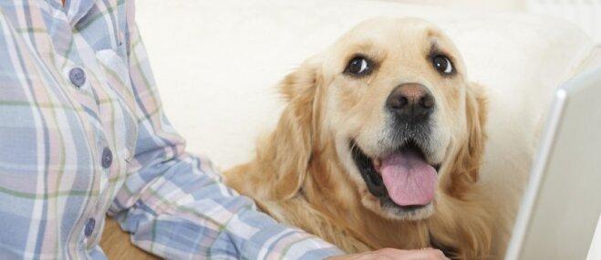 Ekonomiski veidi, kā kvalitatīvi pavadīt laiku ar suņuku