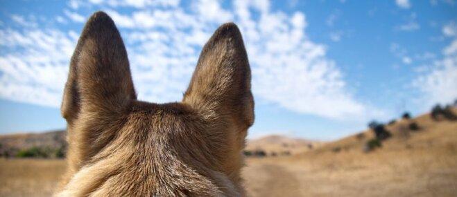 Labākās suņu šķirnes cilvēkiem, kuri dzīvo laukos. Iesaka speciāliste