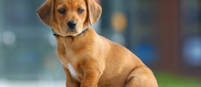 Populāri mīti par mājdzīvnieku veselību, kuri ir tālu no patiesības