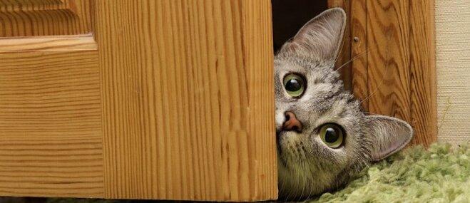 Kur tad kaķis? Amizantas situācijas, kuras mēdz piedzīvot mīluļu saimnieki
