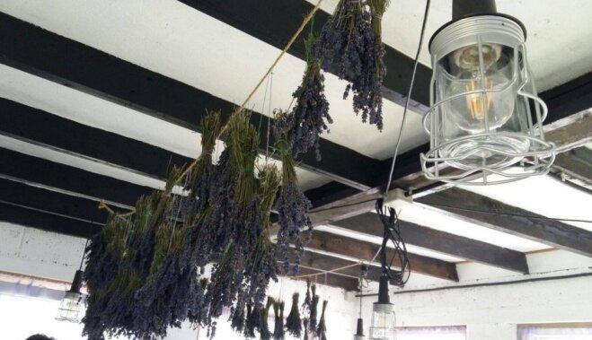ФОТО. С запахом лаванды. Как семья устроила курорт с модульными домиками под Лиепаей