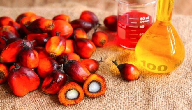 Пальмовое масло: все, что надо знать о его вреде и пользе для человека