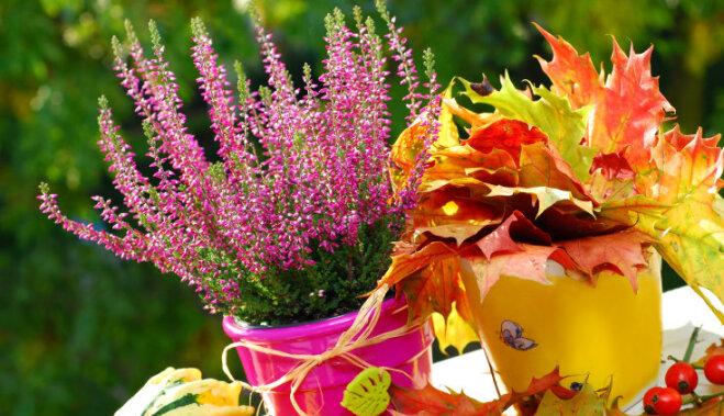 8 ошибок, которые мы совершаем в саду каждую осень