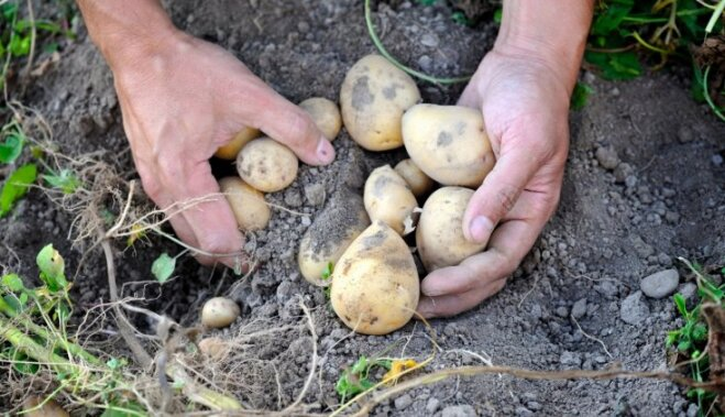 Повторный посев и подготовка земли после сбора урожая в августе
