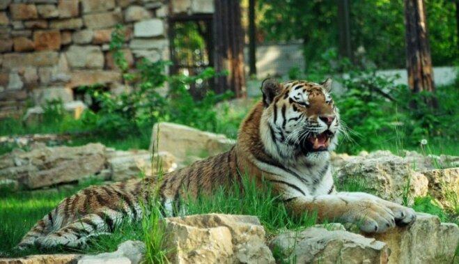 """Надоевшие питомцы, заплутавшие звери и жертвы человеческого незнания: как попадают в зоопарк """"случайные"""" постояльцы"""