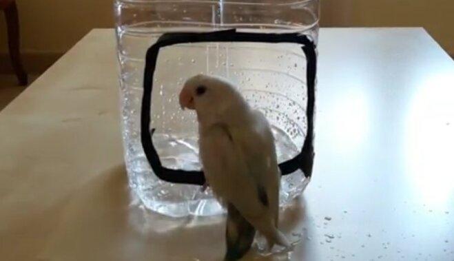 Video: Mīlas putniņš Pako mazgājas īpatnējā dušā
