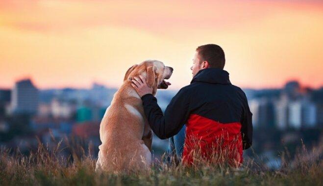 """ОПРОС: Собаку чаще всего покупают, чтобы исполнить давнюю мечту или приобрести домашнего """"сторожа"""""""