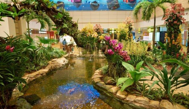 Бани, каток и райские сады: куда сходить в лучших аэропортах мира