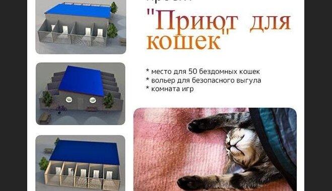 Приют строит вольеры для бездомных котов: проекту нужна поддержка