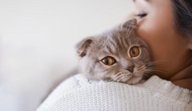 Как кошки влияют на сексуальные предпочтения своих хозяев