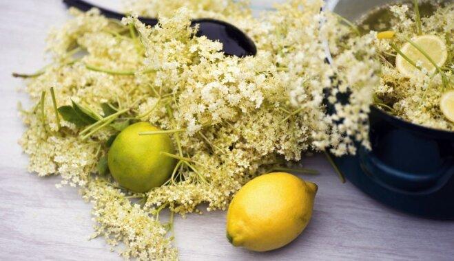 Melnā plūškoka ziedu daudzie pielietojumi – no sīrupa līdz pat pankūkām