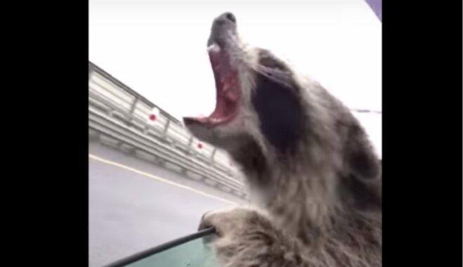 Video: Jenots braucošā auto ķer lietus lāses