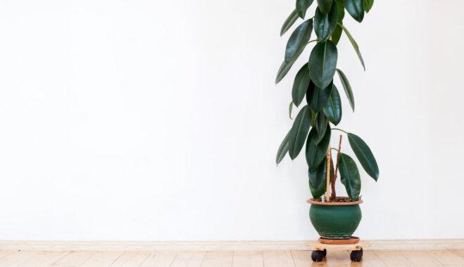 И противогаз не нужен: 6 растений, которые очистят воздух в вашей квартире