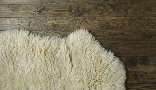 Kā kopt aitādas dekoratīvo paklāju, lai tas vienmēr izskatītos kā jauns