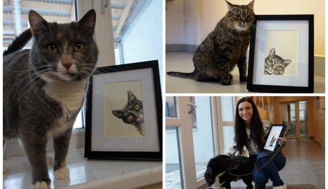 Foto: 'Potenciālie adoptētāji paiet garām' – par mākslas darbu varoņiem kļuvuši negribēti patversmes mīluļi