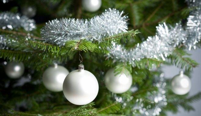 В этом году к Рождеству тоже можно срубить елочку в государственных лесах