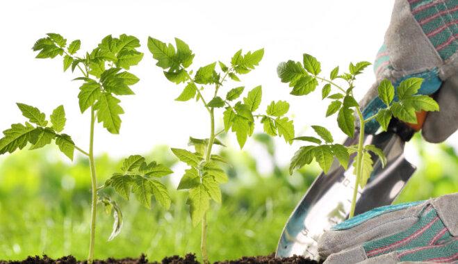 Лунный календарь для садовых работ на 7-13 мая 2018 года