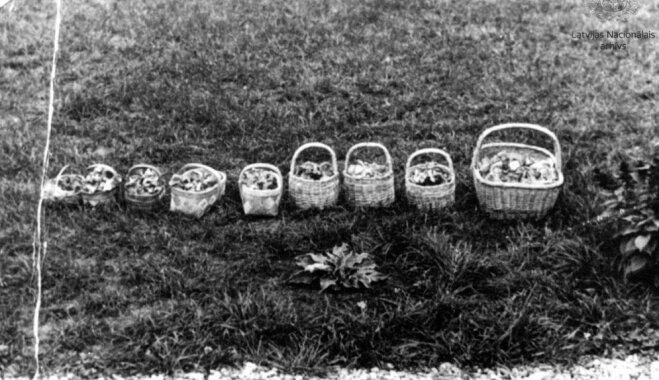 Arhīva foto: Sēņošanas prieki un guvums pagājušajā gadsimtā