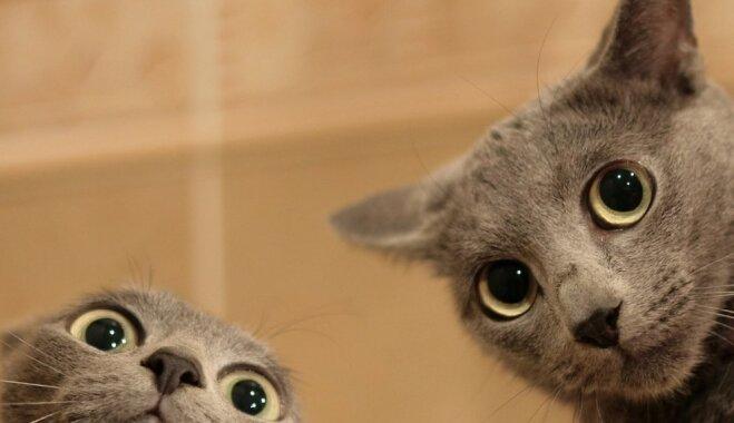 Desmit sadzīviski jautājumi, uz kuriem katrs kaķis būtu pelnījis dzirdēt atbildes