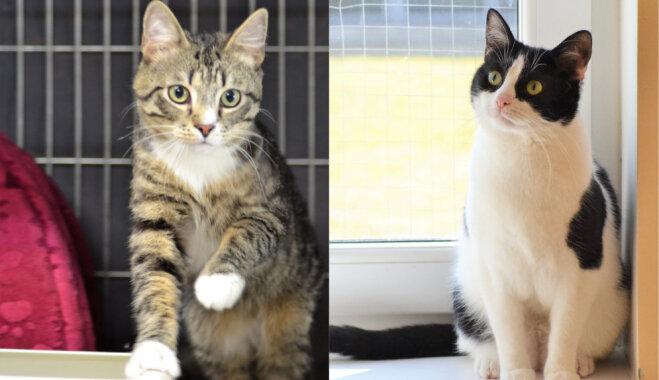Šmaugais Manfrēds un uzmācīgi mīļā Nika – kaķēni, kuri meklē mīlošus saimniekus