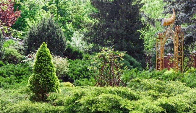 Universālās vēja lauzējas tūjas. Kā audzēt un kopt mūžzaļo dārza rotu