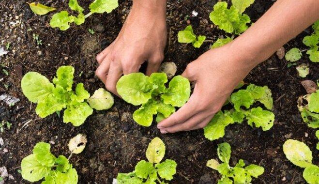 Заходим на посадку: овощи, которые можно сажать ранней весной