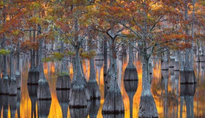 Завораживающие виды: золотая осень в болоте Окефеноки