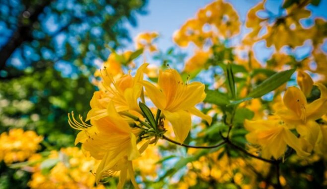 Cад, огород и теплица: что делать в них в июне