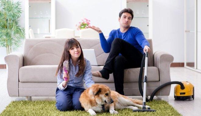 Padoms: kā efektīvi attīrīt mīkstās mēbeles no mīluļa spalvām