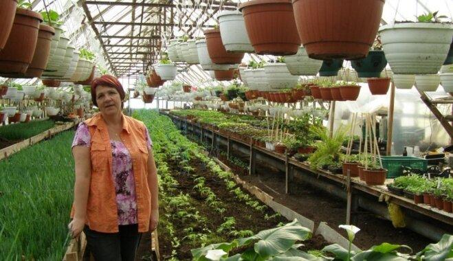 Kad darbs ir arī sirdslieta – stāsts par aizrautīgu darbu pie dažādu stādu audzēšanas