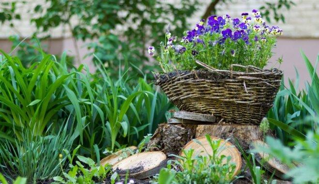Dārza darbu kalendārs: aprīlis