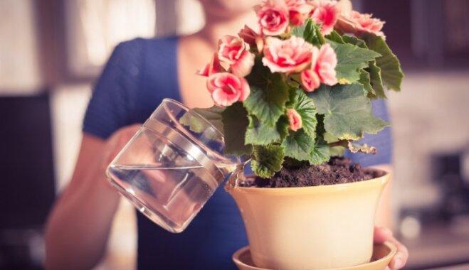 Paraugstunda telpaugu laistīšanā ziemā: eksperta ieteikumi augu lutināšanai