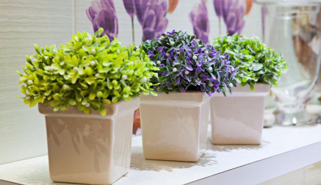 10 комнатных растений, которые идеально подходят для ванной комнаты