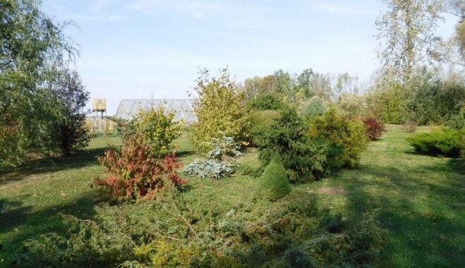 ФОТО. Дендрарий хозяйства Vilki: оазис в Земгале с тысячами растений и голубыми коровами.