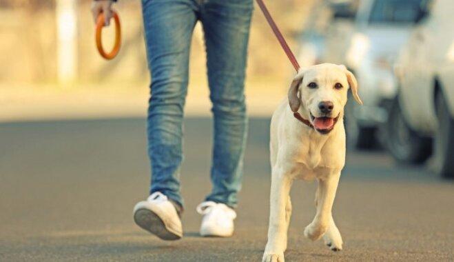 Labi audzināti un paklausīgi suņi aicināti piedalīties lielajā pastaigā Rīgā