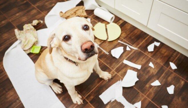 Dzīvnieku apdrošināšana: vai ir vērts apdrošināt suni