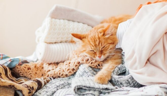 Pieci pašsaprotami ikdienas paradumi, ko mācīties no kaķa