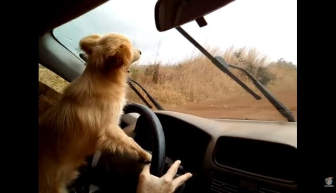 Video: Šunelis naski cenšas iekosties logu tīrītājos