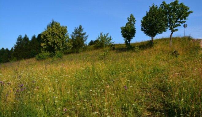 Ainaviskas Latvijas pļavas, kurās meklēt daudzveidīgas Jāņu zāles