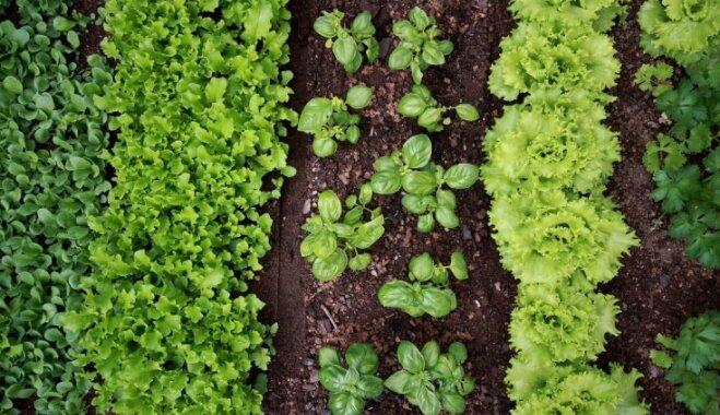 Царство теней: 16 овощей, которые можно выращивать без яркого солнца